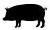product_icon_animal_pig_7